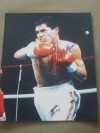 Julio Cesar Chavez Former Six Time World Champion In Three Weight Divisions And Hall Of Famer SIGNED Action Shot Photo